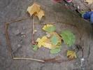 Bild 5 Schmetterlinge.jpg